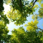 Burgerbelangen wil meer informatie over kappen van bomen